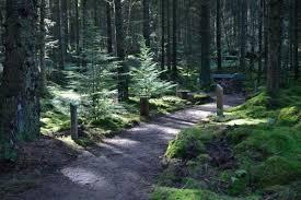 Scout Winter Camp – Hawkhirst Adventure Camp – Kielder, Northumberland